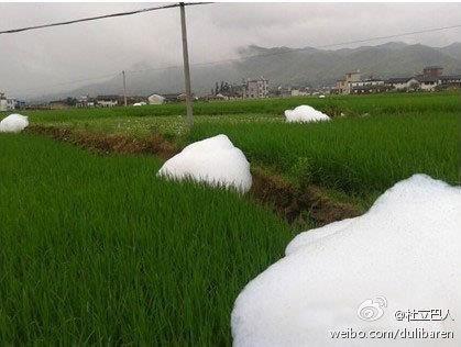 L'immagine delle incredibili bolle bianche fuoriuscite dalle risaie in Cina