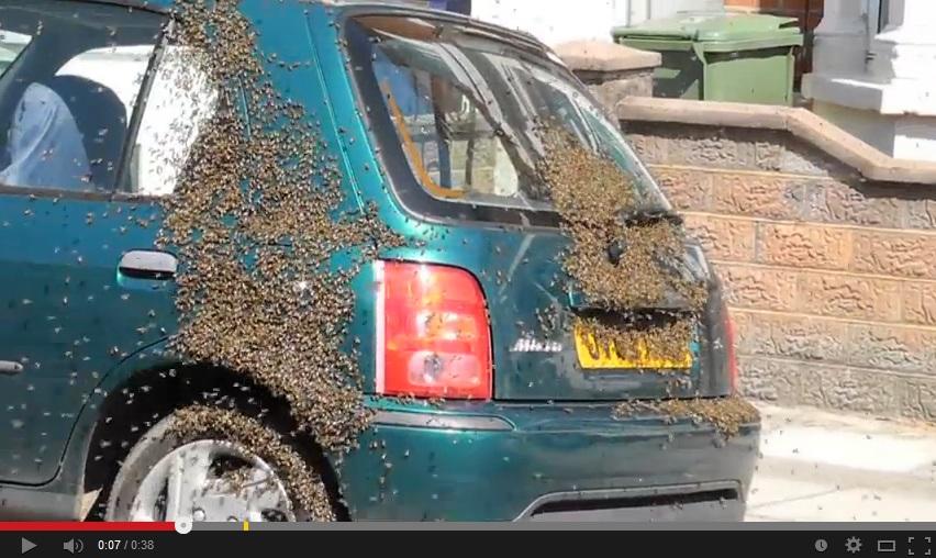 Migliaia di api ricoprono un automobile evento for Nuova casa coloniale in inghilterra