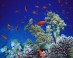 barriere coralline caraibi