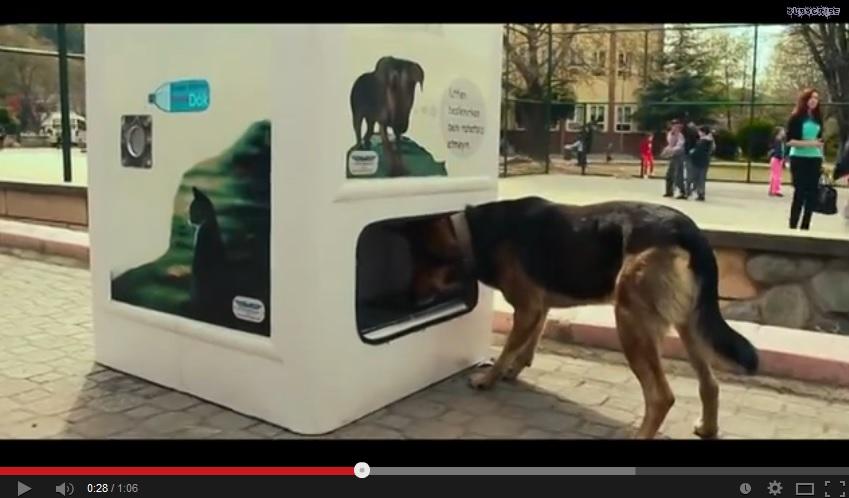 Una macchina per riciclare plastica e sfamare i cani for I cani youtube