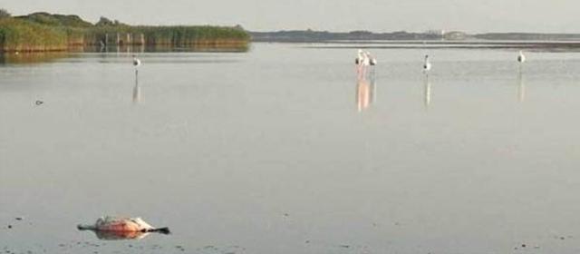 Sardegna moria di fenicotteri rosa nello stagno di pilo centro meteo italiano - Lo specchio dei desideri sassari ...