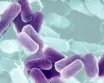 Superbatteri: entro il 2050 provocheranno più vittime del cancro