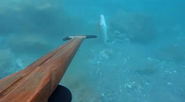 Pesca in apnea splendide immagini arrivano dai fondali for Immagini coralli marini