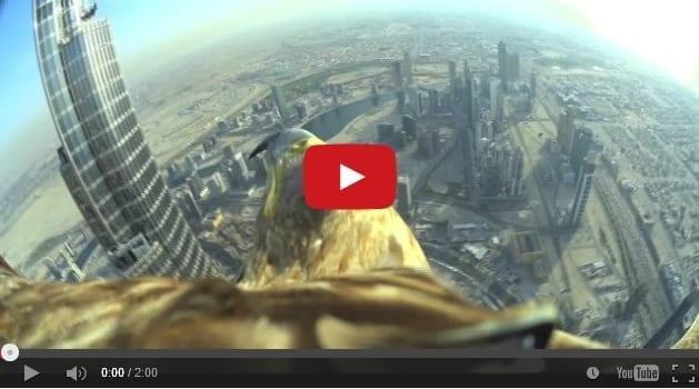 Filmato il volo di un aquila dal grattacielo pi alto del for Grattacielo piu alto del mondo