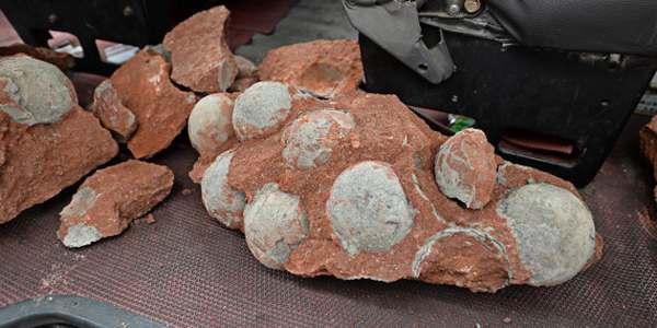 uova di dinosauro trovate in cina