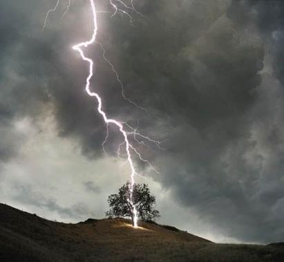 Fulmine colpisce albero che esplode letteralmente in numerosi pezzi