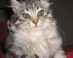 Perché i gatti odiano i giri in auto? la scienza risponde