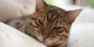 La M sulla fronte dei gatti: cosa rappresenta? – Centro Meteo Italiano