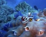 Scoperta la prima forma vivente sul Pianeta: una spugna. Fonte della foto: http://scienzenotizie.it/