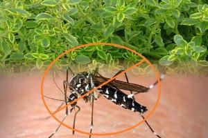 Zanzare ecco come affrontarle con un rimedio naturale - Contro le zanzare in casa ...
