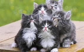 Avete trovato dei gattini appena nati e abbandonati? Ecco come salvargli la  vita \u2013 foto videobassocosto.it