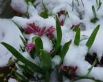 Neve Alpi e Appennino nevicate tardive potranno imbiancare i rilievi a quote medio alte