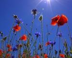 METEO  anticiclone alle porte, con sole e caldo nei prossimi giorni