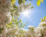 METEO  sole e caldo nuovamente protagonisti nei prossimi giorni con l'anticiclone