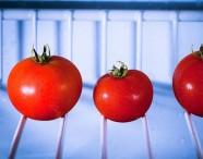 conservare-i-pomodori
