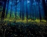 fireflies-japan