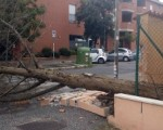 roma albero