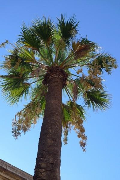 Uragano come fanno le palme a resistere alla forza di - Radici palma ...
