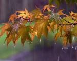 Previsioni prossimi giorni condizioni meteo instabili ma con clima mite