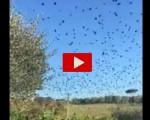 Terremoto Centro Italia: uccelli impazziscono durante la scossa