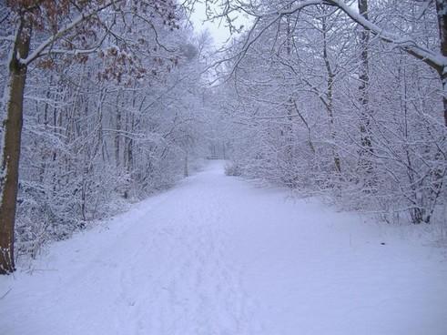 L'inverno a fine Novembre. Veloce ondata di freddo
