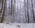 La neve ha fatto la sua comparsa sui rilievi meridionali - Gambarie Web