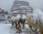 Neve in Arabia Saudita fiocchi sono scesi fino ad imbiancare il deserto