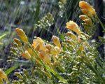 meteo-primavera-la-stagione-potrebbe-iniziare-con-un-marzo-dinamico-e-piovoso-sullitalia-soprattutto-al-centro-nord