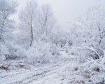 neve-in-arrivo-sullappennino-localmente-anche-abbondante-fiocchi-anche-sulle-alpi-specie-sui-settori-di-confine