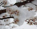 METEO PRIMAVERA: mese di Marzo che potrebbe essere dinamico sull'Italia, fresco e piovoso soprattutto al Centro-Nord.
