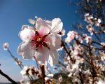 Caldo al Sud Italia anticipo di primavera con temperature che potranno sfiorare i +25°C