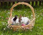 Previsioni Meteo Pasqua 2017: il tempo che dobbiamo aspettarci nella festività più importante della primavera