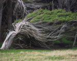 alberi-piegati-dal-vento-3