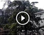 Video live, scende la neve tra Appennino molisano e Gargano: il fenomeno ripreso in diretta poco fa