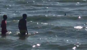 Tirrenia squalo a due passi dalla spiaggia fuggi fuggi dal mare