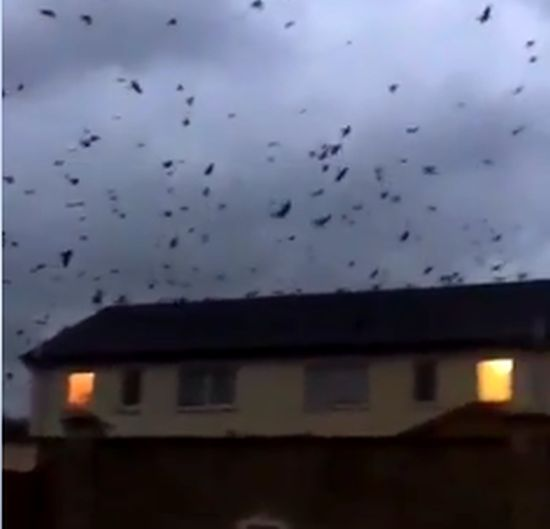 La fuga angosciante degli uccelli dall'Uragano Ophelia: il video di poco fa che sta diventando virale  (filmato presente a pagina 2 )