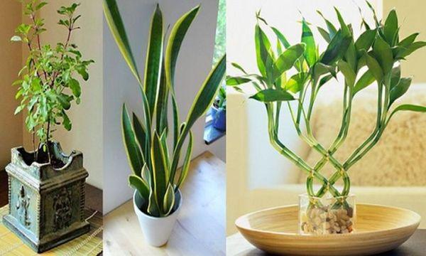 Piante Ufficio Ossigeno : Inquinamento domestico piante da appartamento che depurano l
