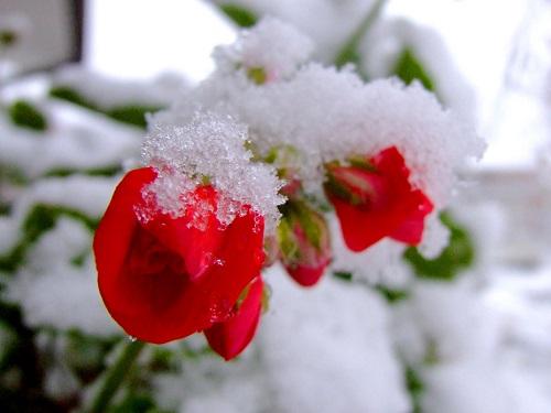 Altro che primavera… torna la neve anche in pianura