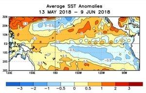 El Niño: 50% di possibilità che torni a svilupparsi durante l'inverno boreale