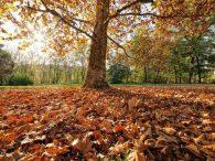 Più sole nel weekend ma calo delle temperature a seguire? - br.depositphotos.com