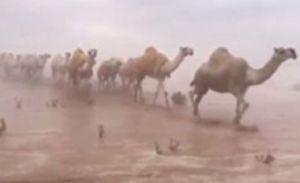 Alluvione in Kuwait: in un giorno la pioggia che normalmente cade in un intero anno