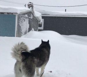 Freddo intenso in Canada: oltre 1 metro di neve nel Labrador