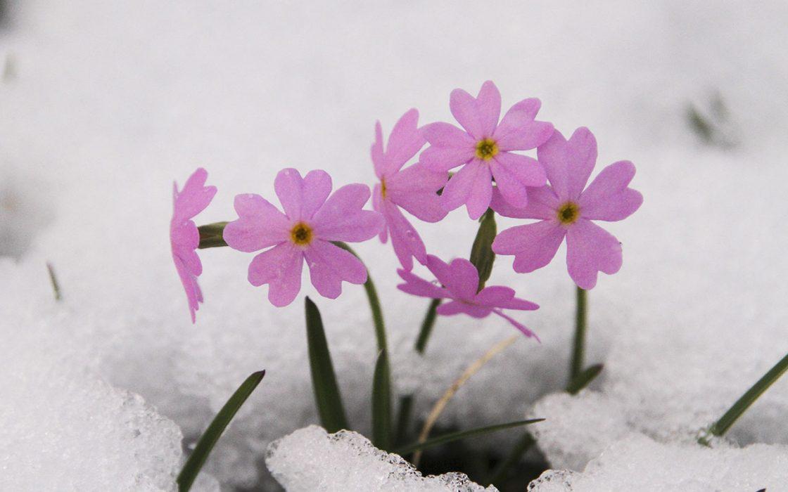 Freddo o primavera nel weekend? Ecco la tendenza meteo - sienanews.it