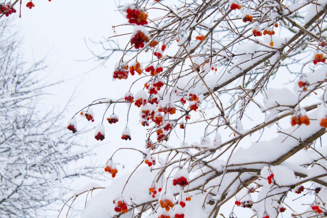 Italia nel mirino di freddo e neve per la prossima settimana con un possibile peggioramento meteo dopo un weekend primaverile. Fonte: pexels.com