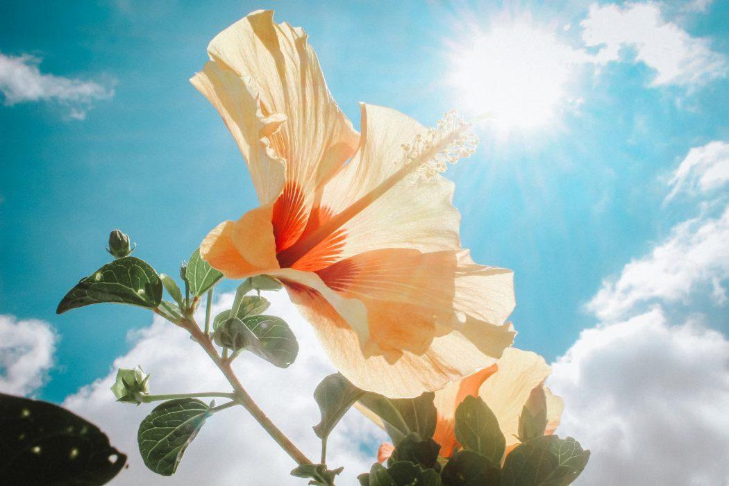 Weekend con tempo stabile, soleggiato e clima mite: fine settimana di primavera grazie all'anticiclone sull'Italia. Fonte: pexels.com