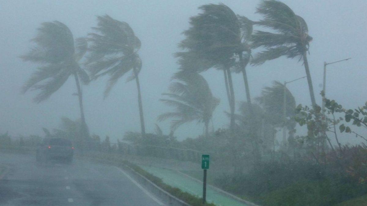 Tempesta in Italia: venti intensi e strage di alberi in molte regioni. Foto repertorio