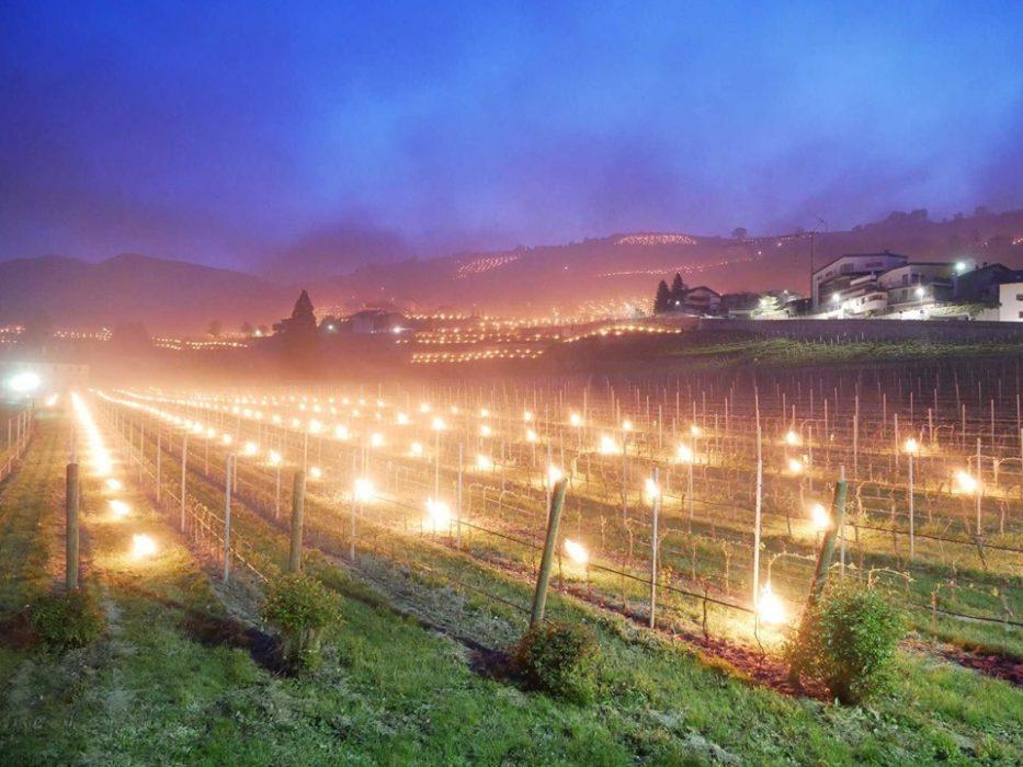 Gelate tardive in Trentino Alto Adige e sistemi di prevenzione. Foto Kloster Neustift