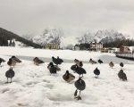 Neve Alpi, foto Giuseppe Pais Becher Alpstation Lavaredo.