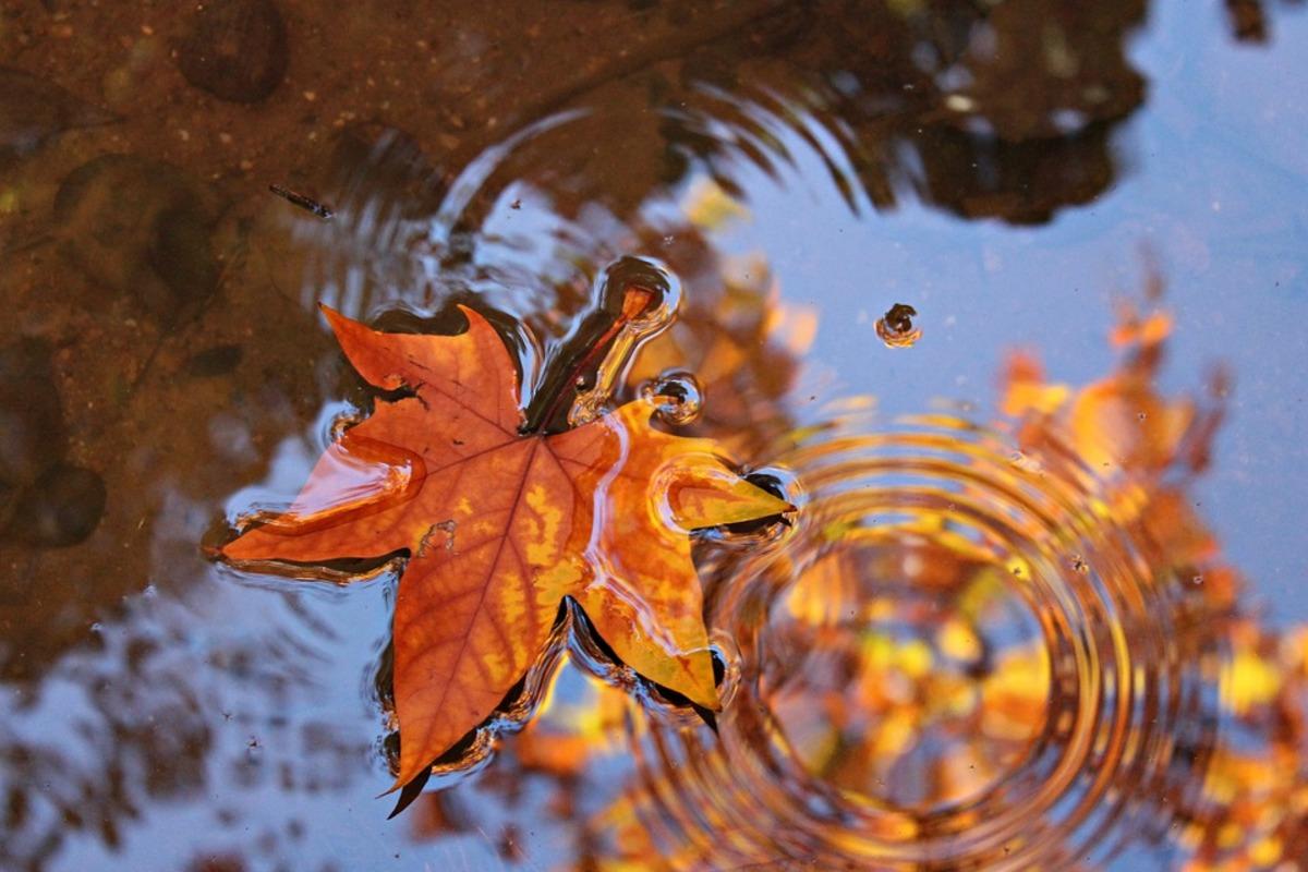 Risultati immagini per autunno