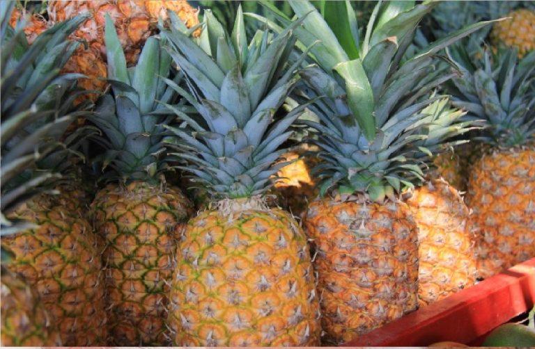 L'ananas fa perdere peso? Ecco la verità. Tutte le proprietà e le controindicazioni